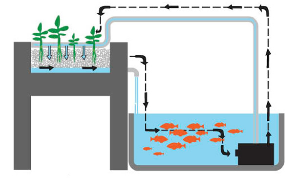 aquaponic diagram