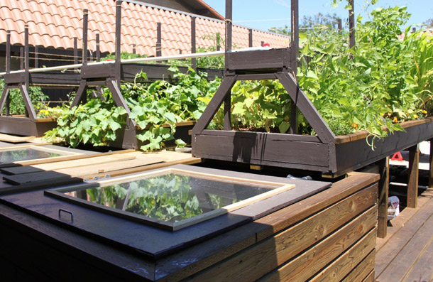 Sustainable Food Production Using Aquaponic Gardening