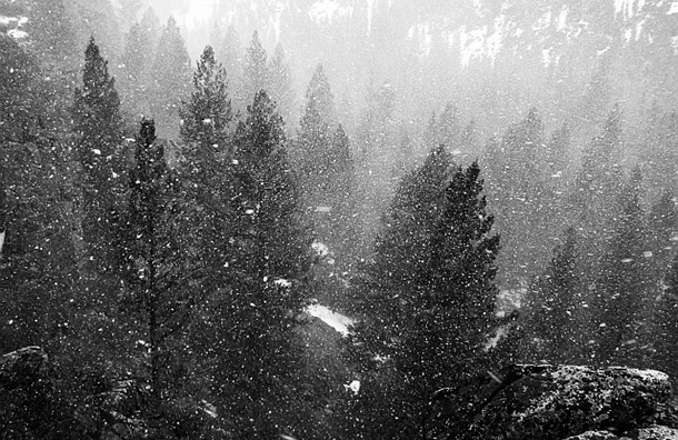 snow storm wilderness