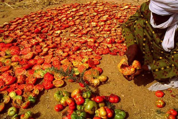 preserving food by drying in the sun