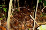 snare trap set in woods
